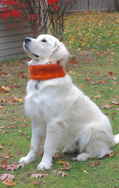 dog-ribbed-cowl-christy