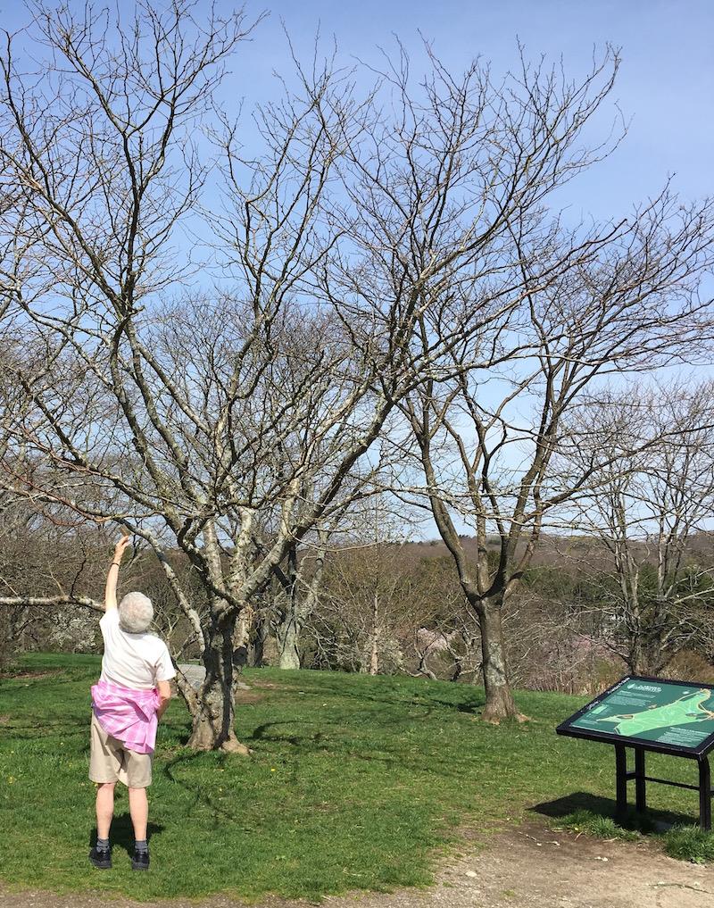 Agh-arboretum2