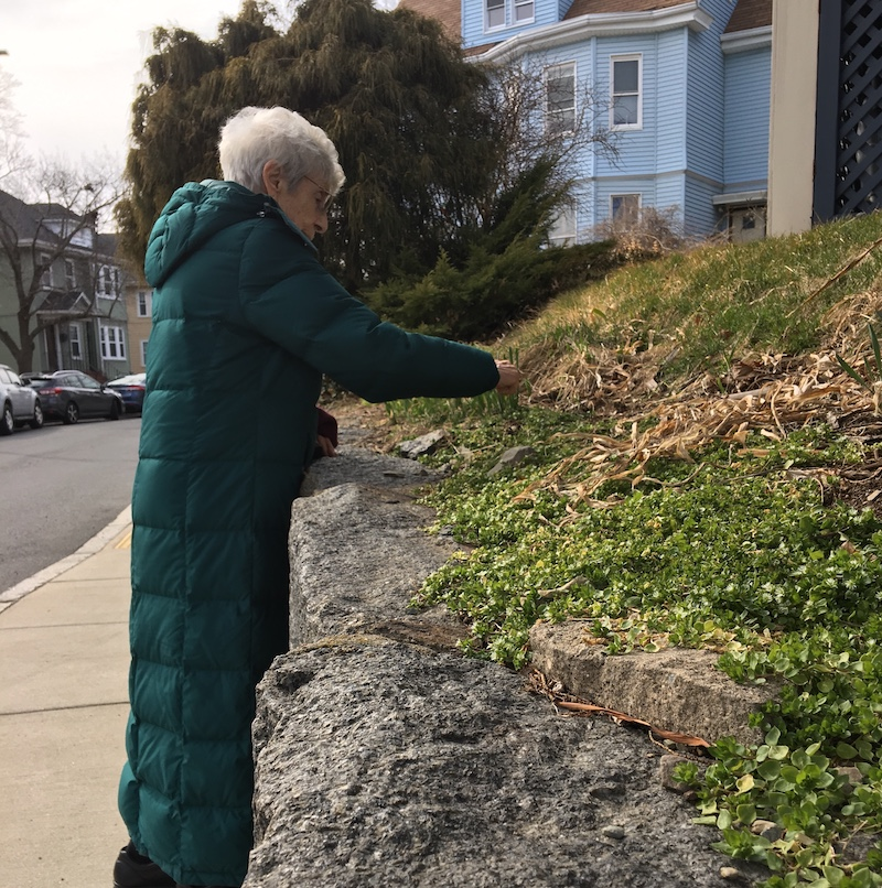 old woman in green coat next to stone wall, clearing dead plants from grassy garden